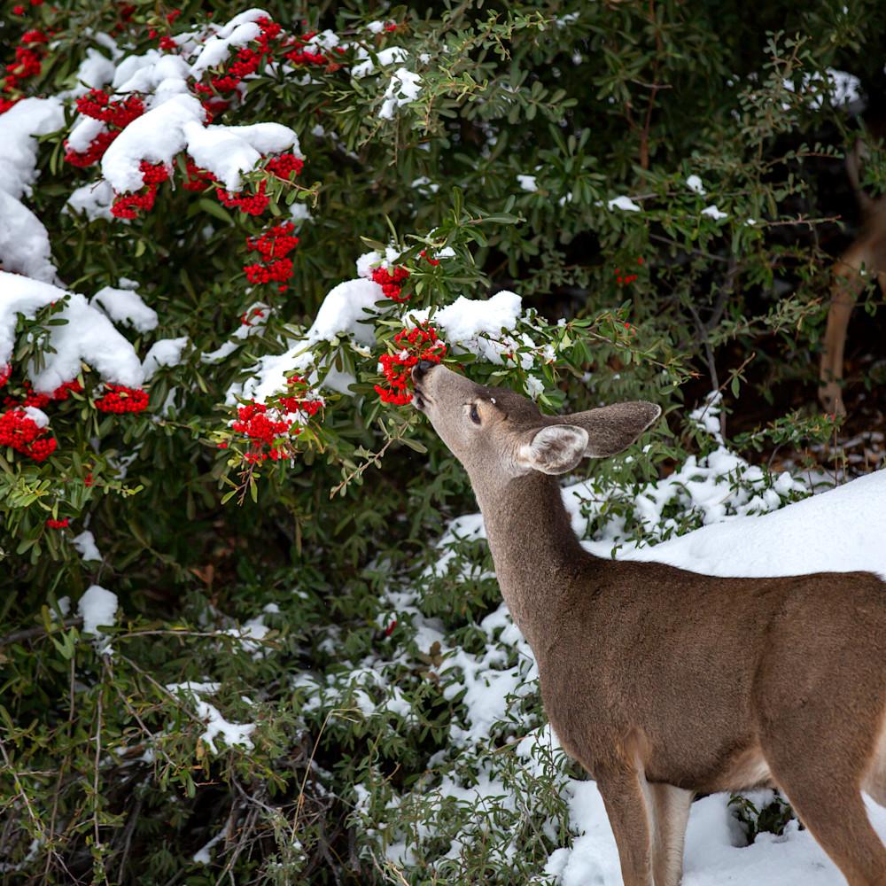 Deer j8hgyf