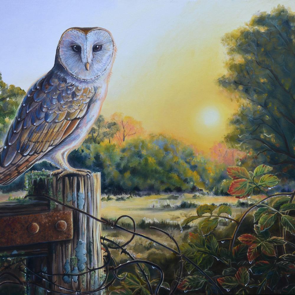Barn owl sunset after the rain socialmedia pnrtn4