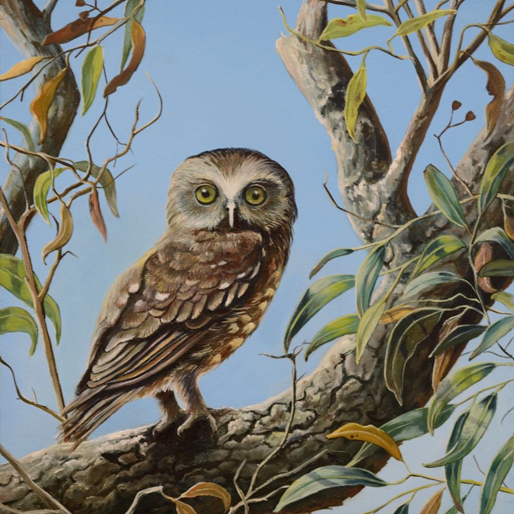 Boobook owl whooo s there socialmedia mqsnwb