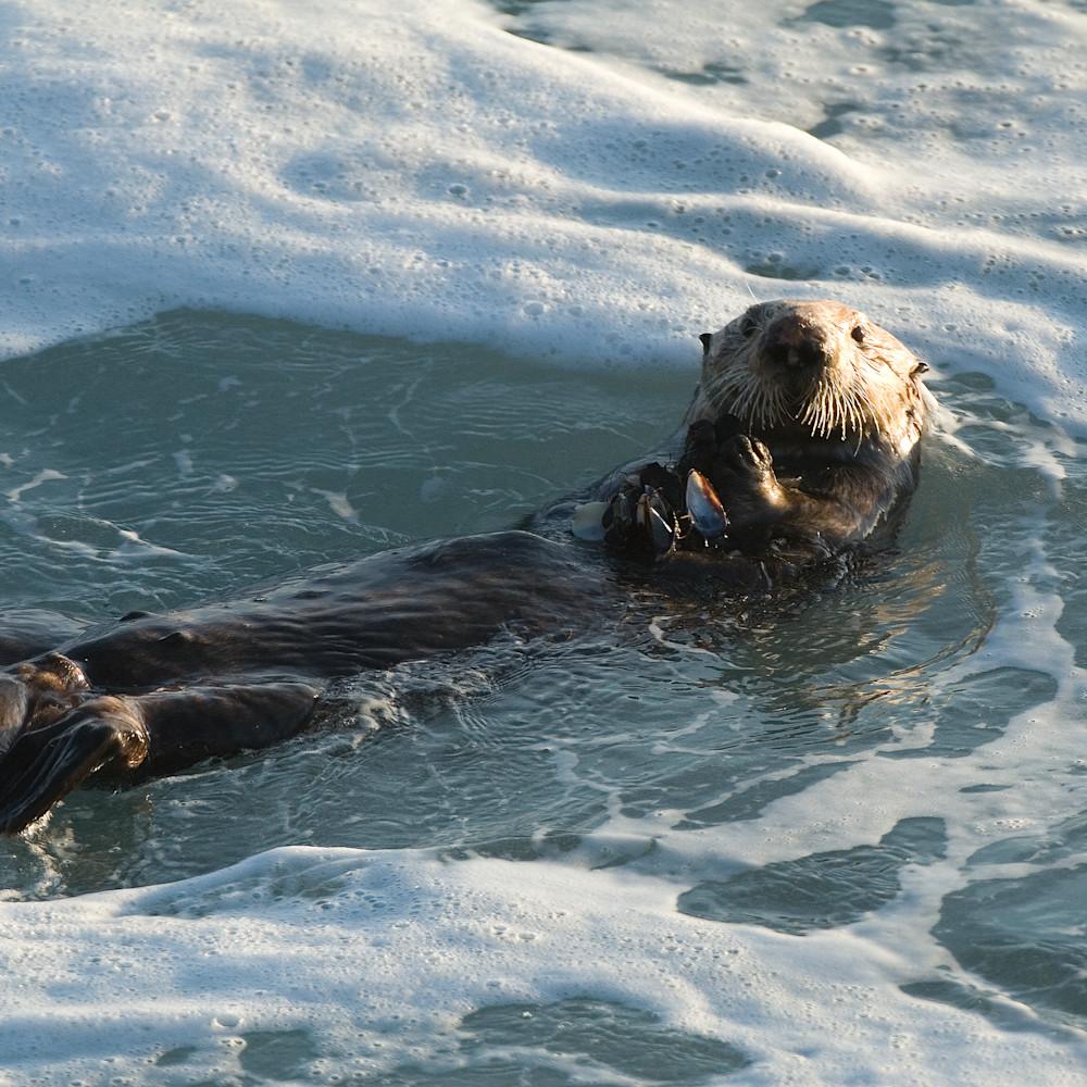 Otter nwgake