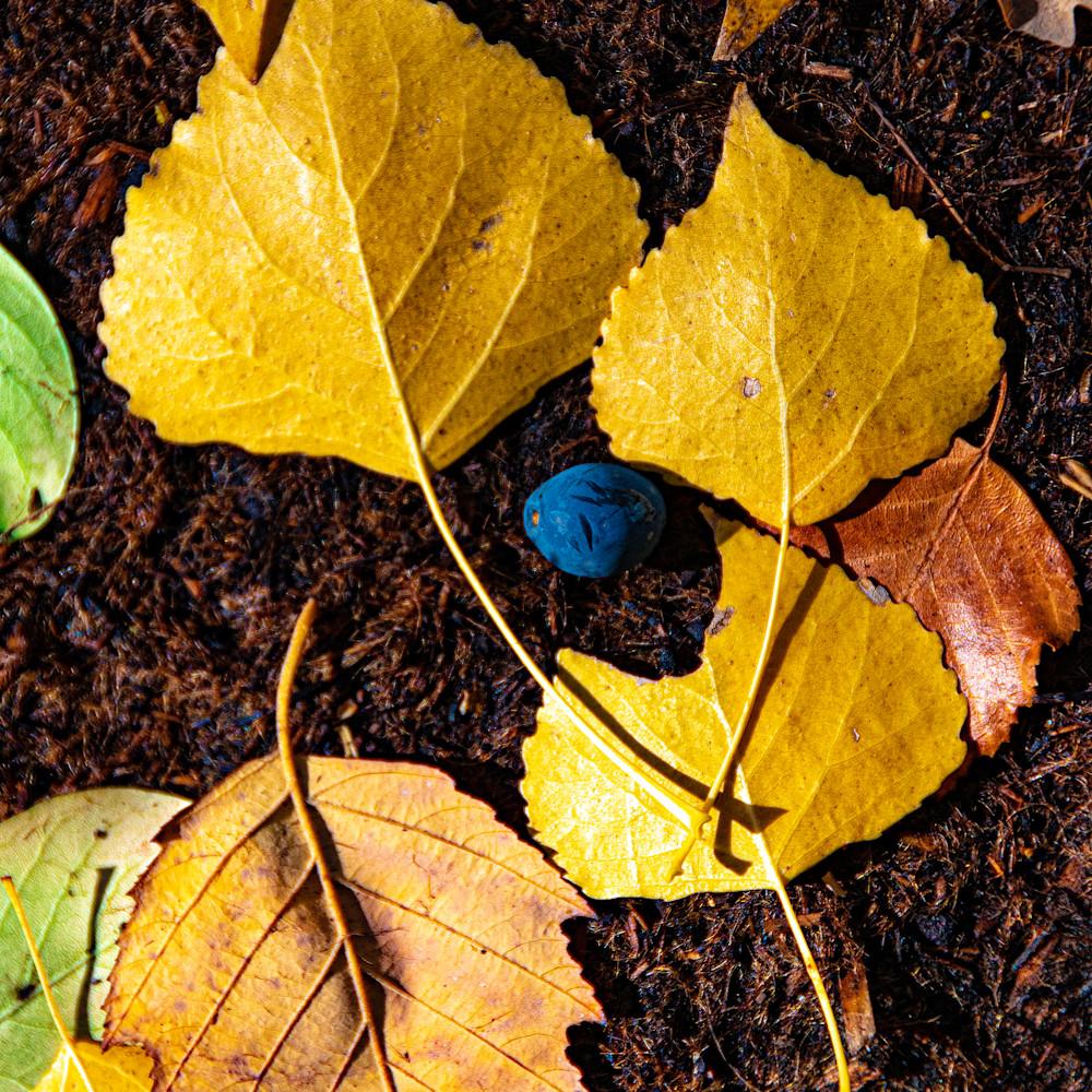 Berry in fall gluyhw