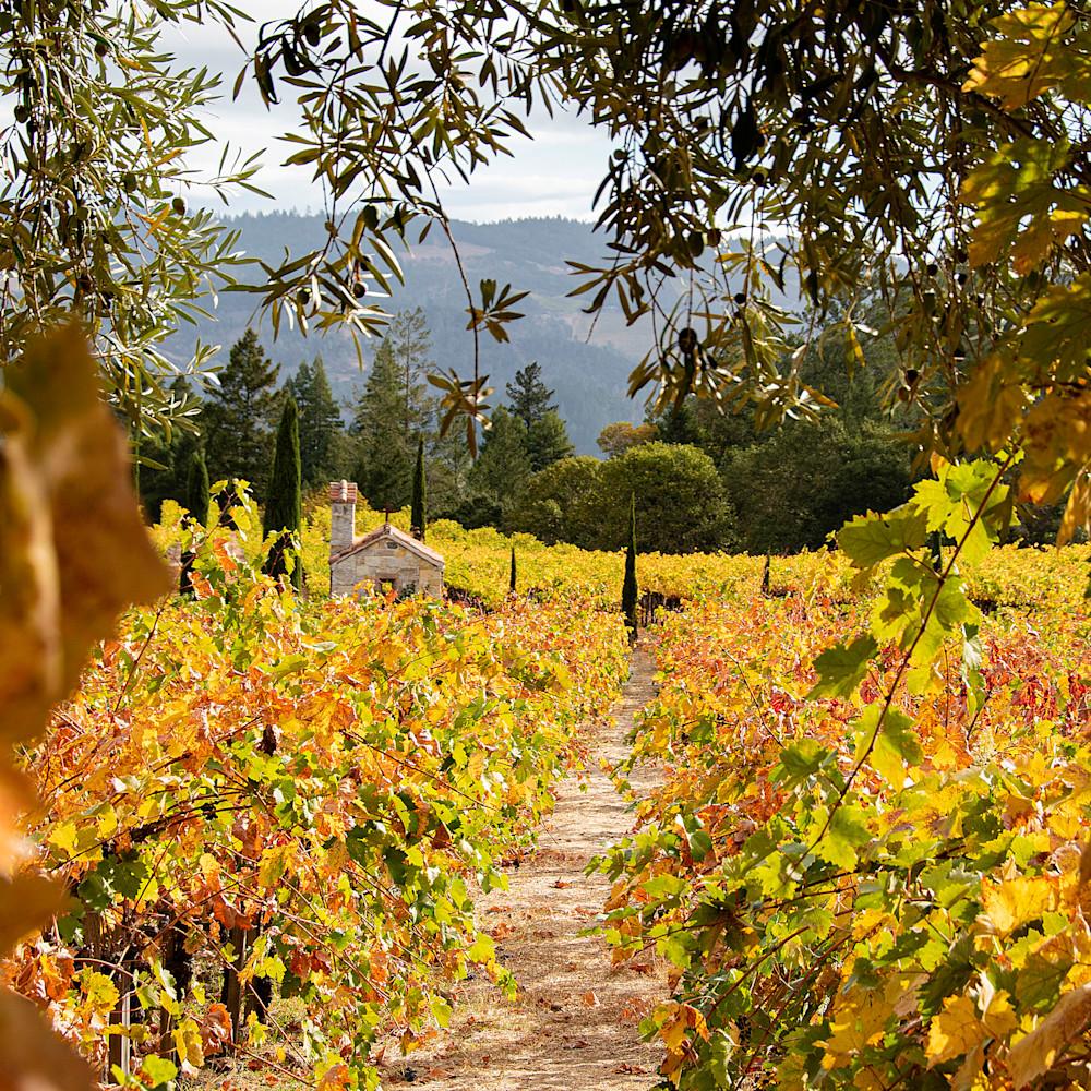 Chapel in vineyard jik3rs