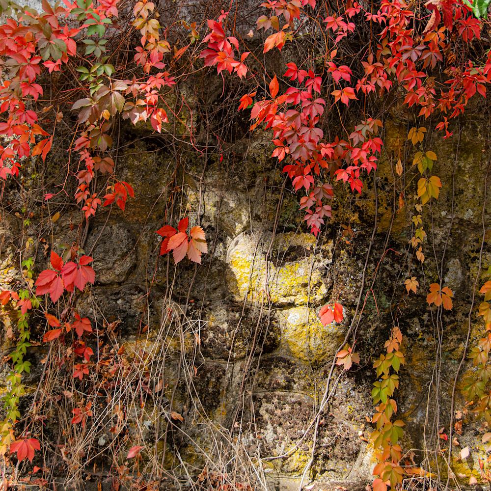 Fall vine pwpuyc