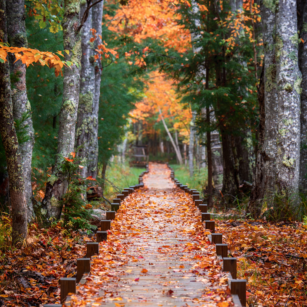 Autumn at jesup path qchhjl
