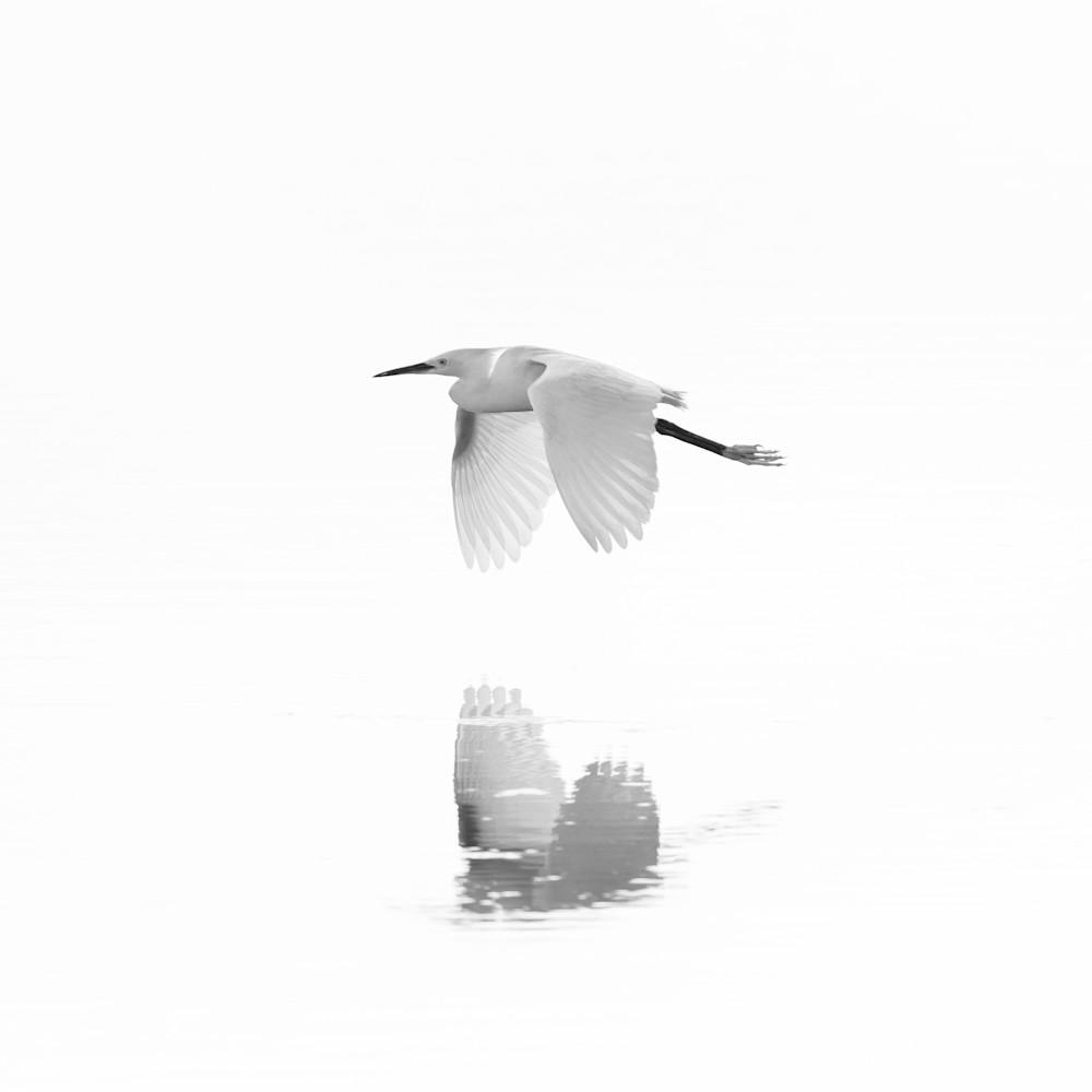 Snowy egret reflections jmf4rl