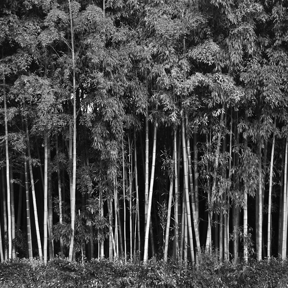 Bamboo b w qbnxyl