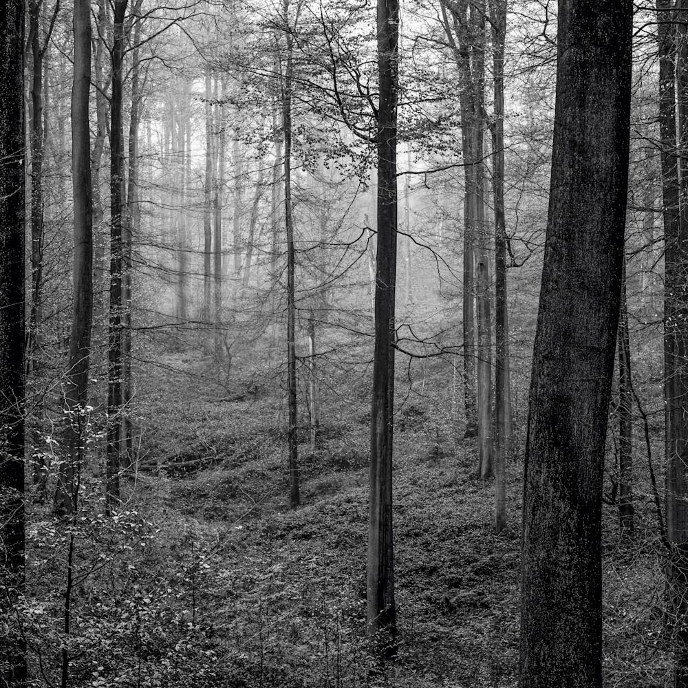 Sonian forest no 20 belgium 2019 yjcntv