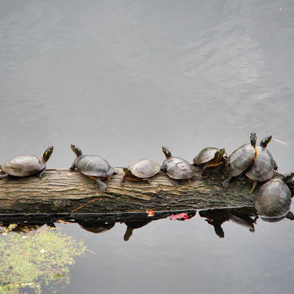 Turtles okthwf