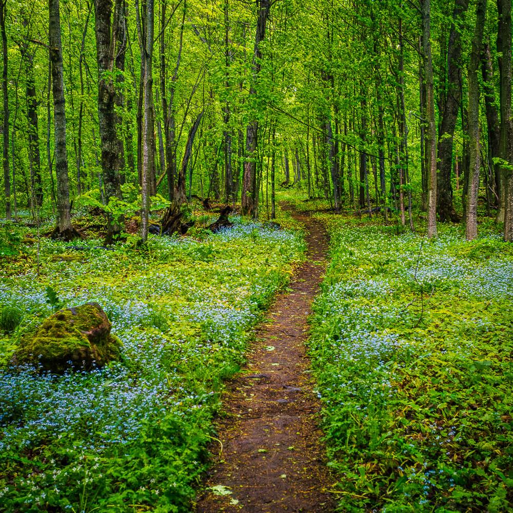 Forest floor v es 2371 it6d4j