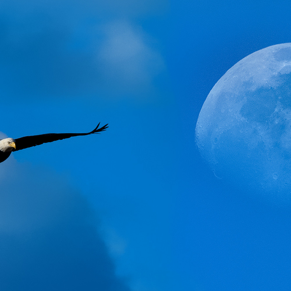 Eagle moon 08a2590 vec0zc