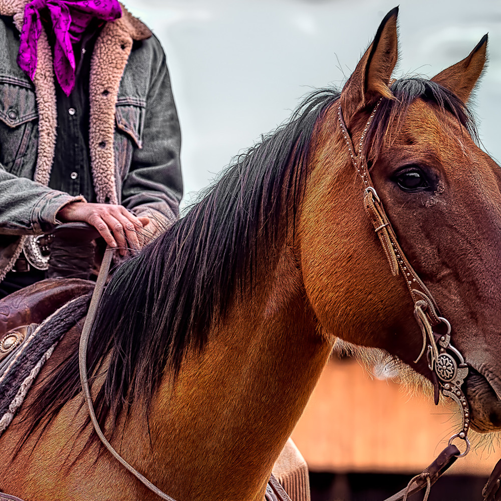 Horse scarf z7q32 bkw0jx