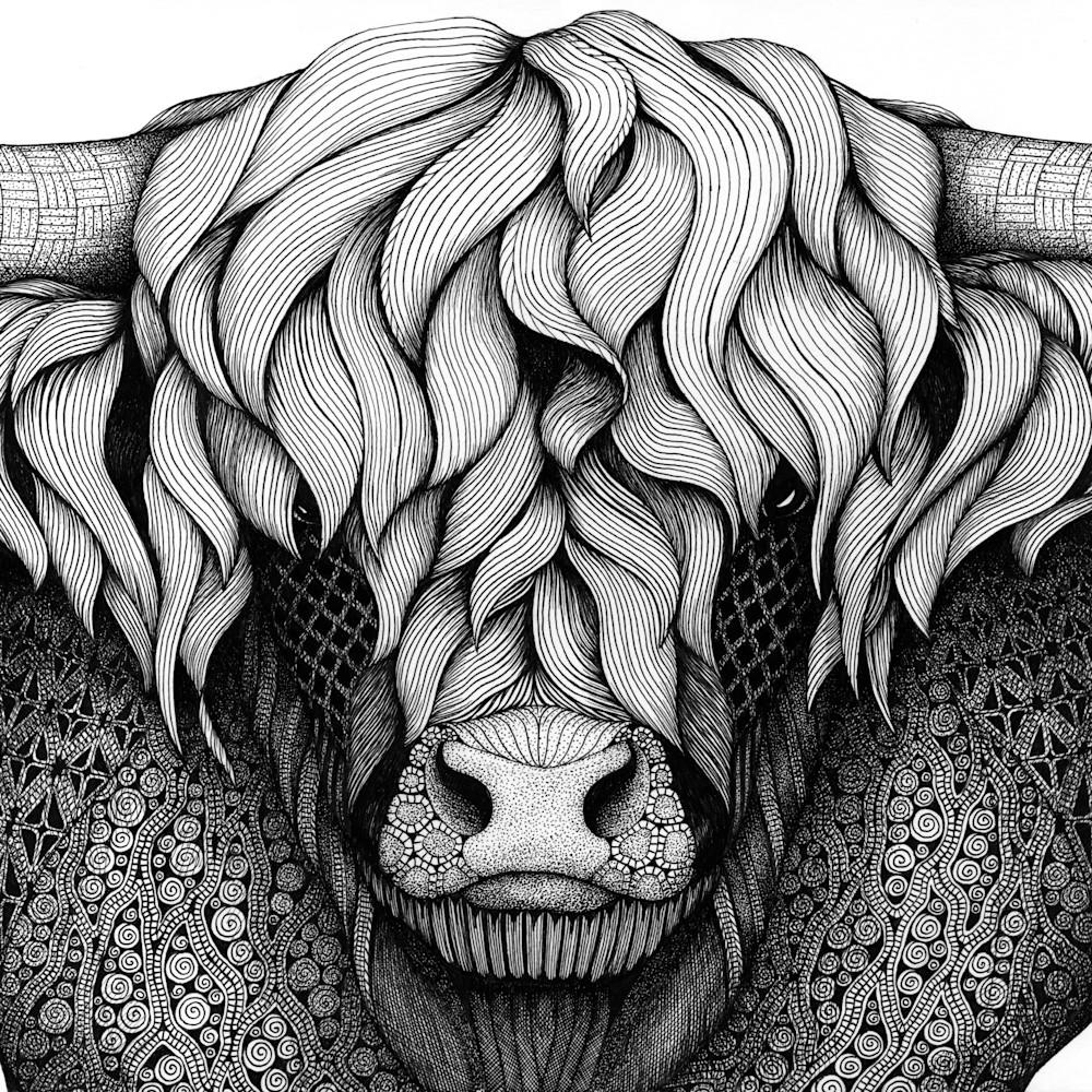 Cow  highland fzuupi