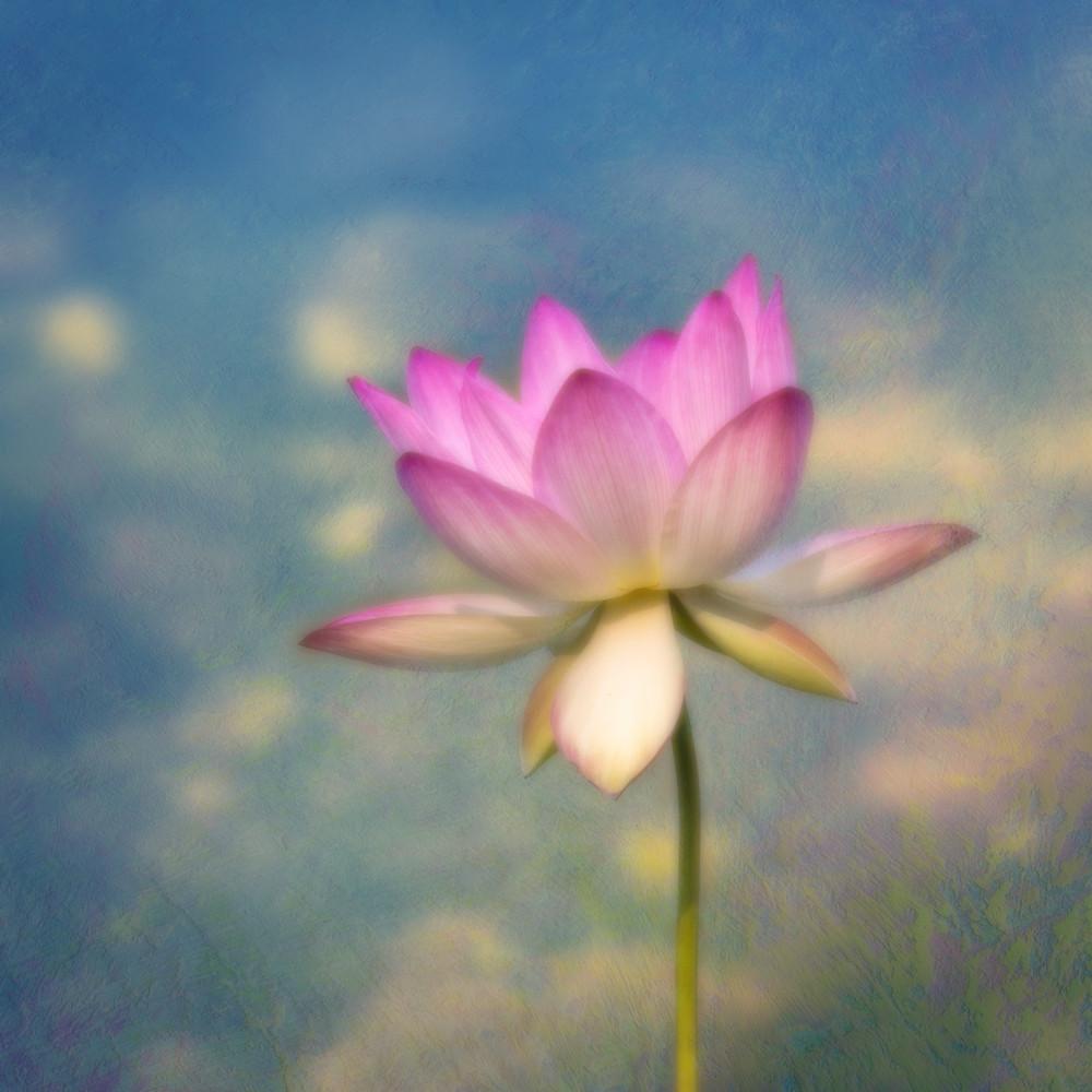 Lotus rising  zwx4ex
