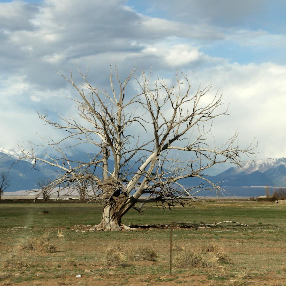 Elizabethmoore treeskeleton 0052 vpoye8