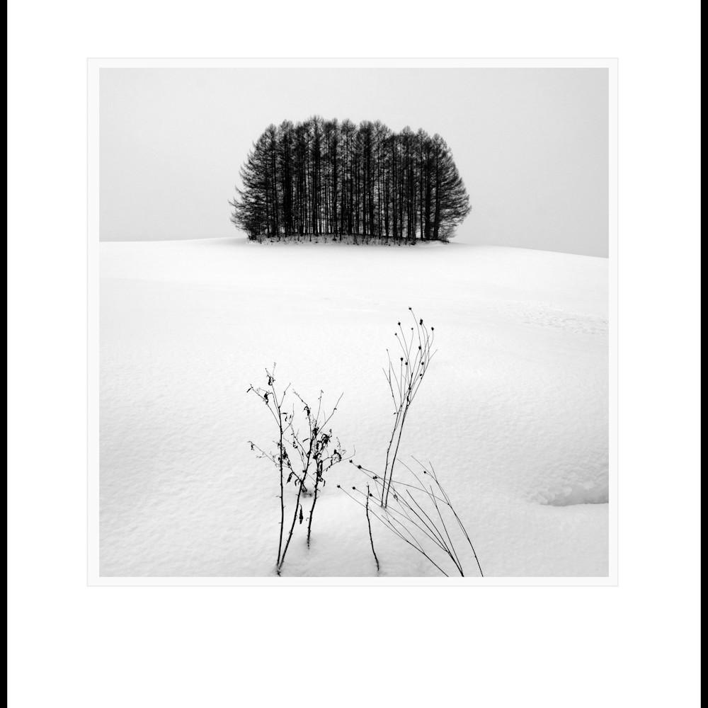Tree copse study1 zjmvha