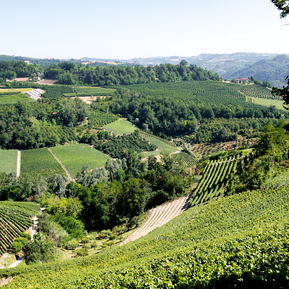 Northern italian vinewyards  xrccvn