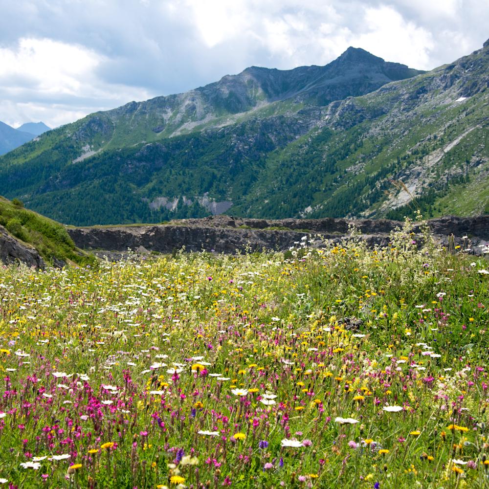 Alpine meadow isere pass france 2 xfnfkl