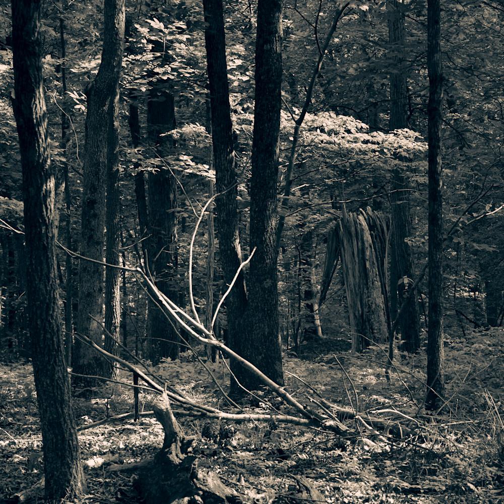 Nature bw 5183 uvulir