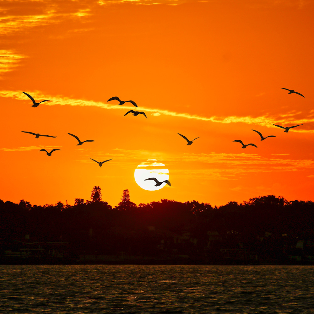 Sunrise tampa bay m4dtvn