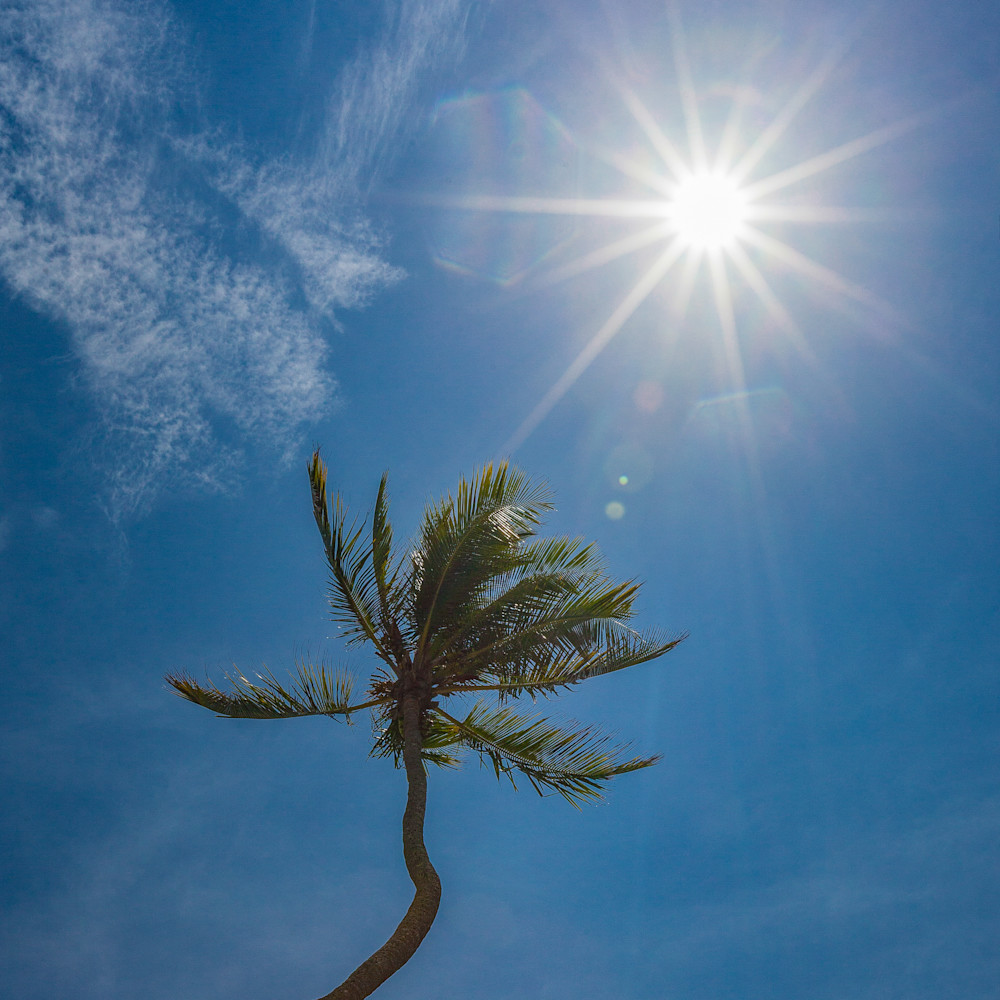 Palm sunburst la0bpe