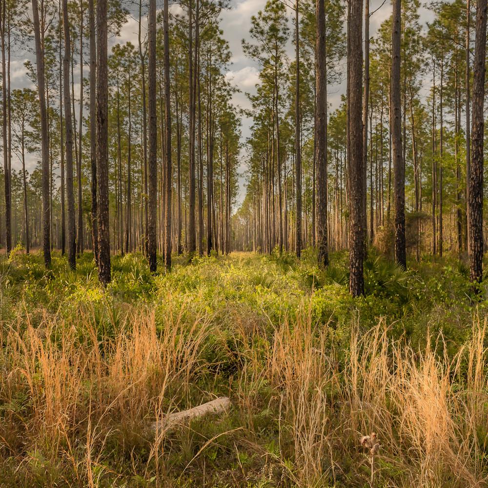Forest lane asf rkg8vb