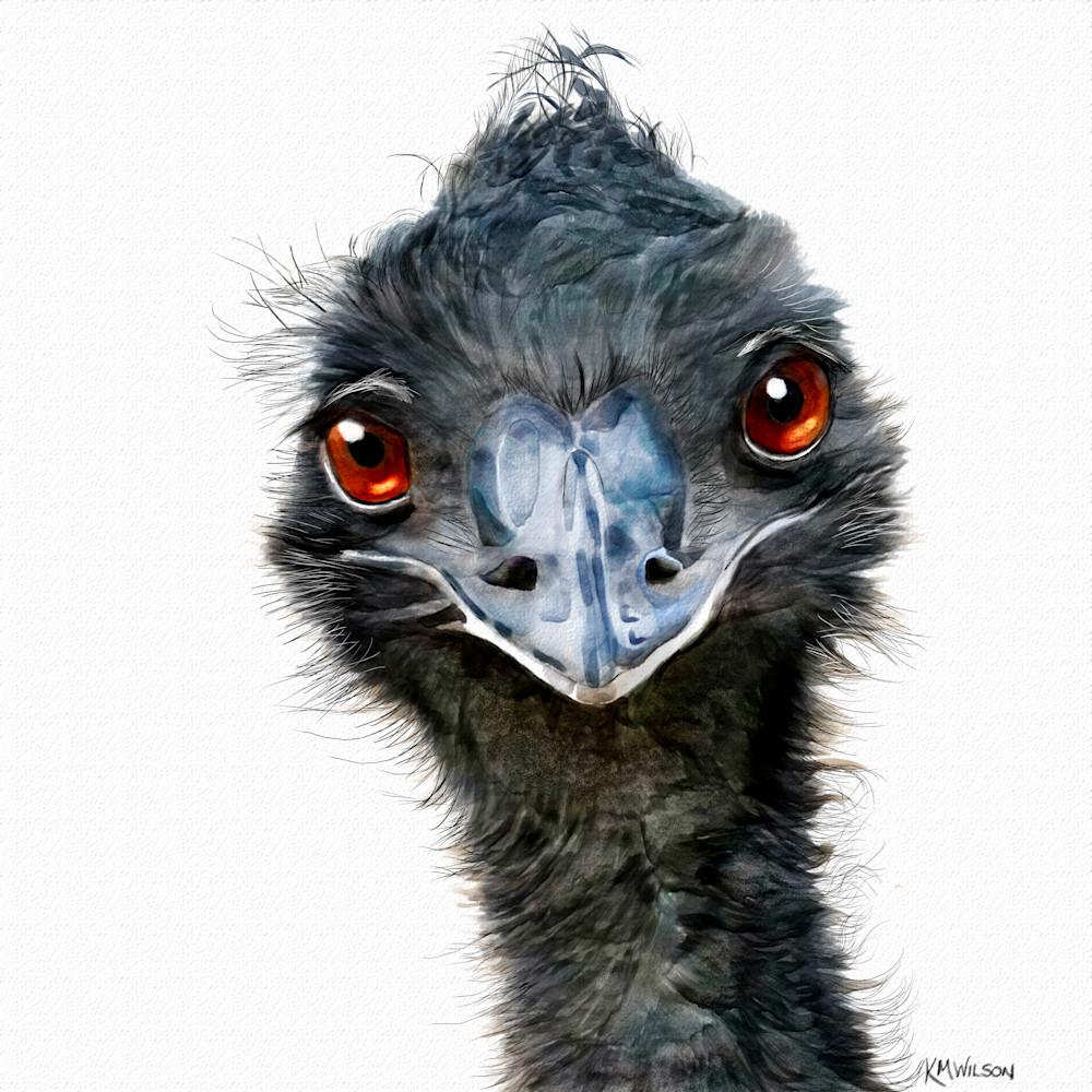 Hugh the emu fxyajy