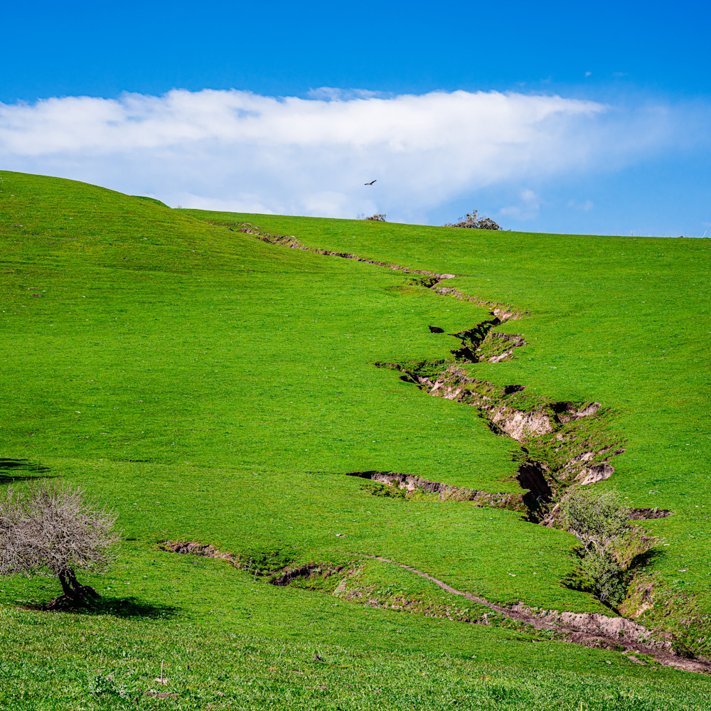Pasture california 2020 uorxzc