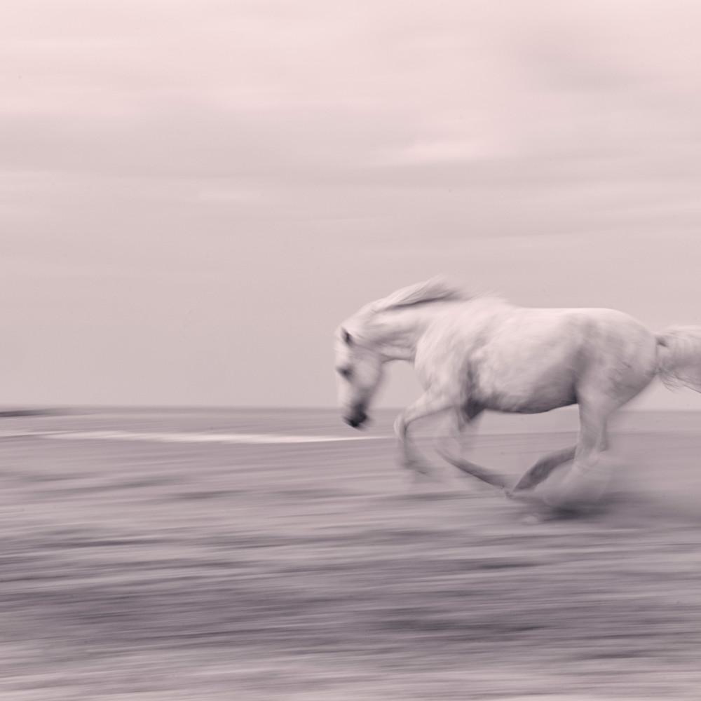 Beach gallop bewxoj