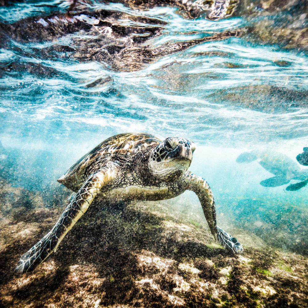 Sea turtle 2018 1 of 1 mqkb4e