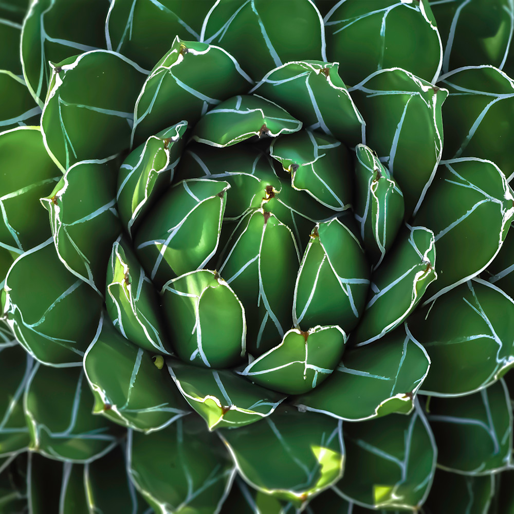 Armored chlorophyll qaivgf