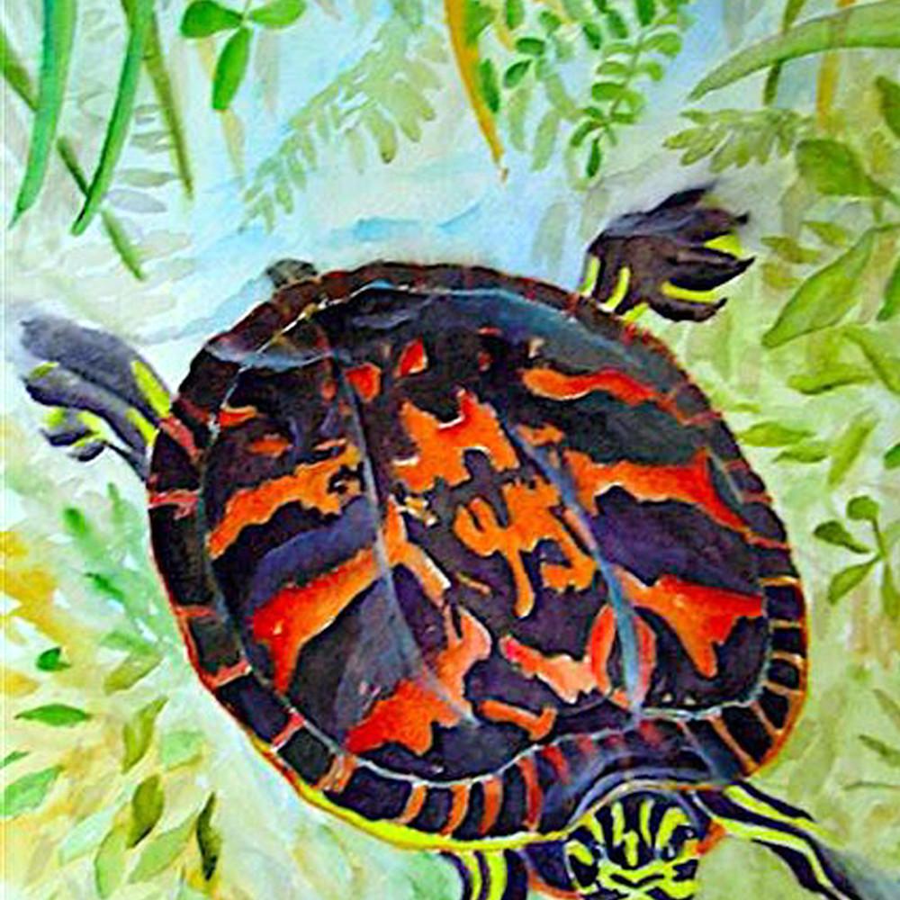 Painted turtle lrzkjv