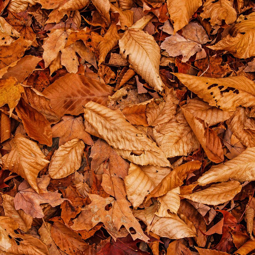 Fall leaves 2016 wcpc7u