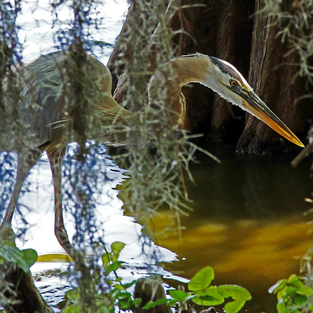 Florida heron drp3k4