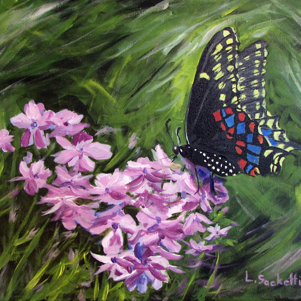 Butterfly 2   copy zhp2d1