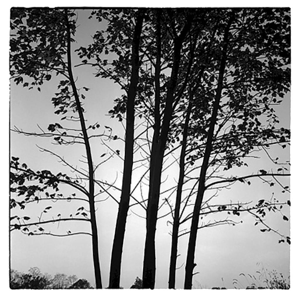 Treesvi copy jykjdf