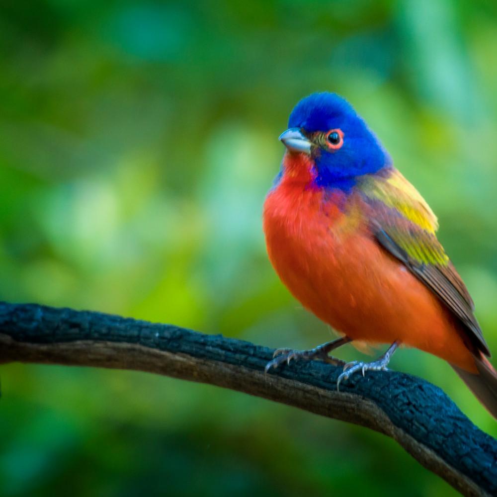 Backyard birds apr 2020 20200425 3134 morpfv