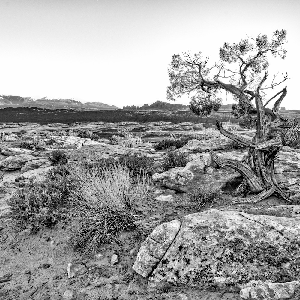 Andy crawford photography alone in the desert umrsgq