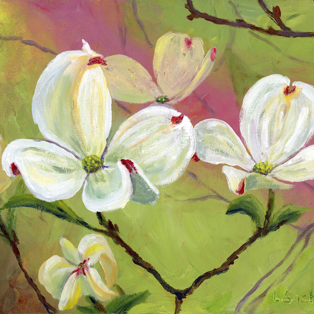 Dogwood flowers 1 jleun1