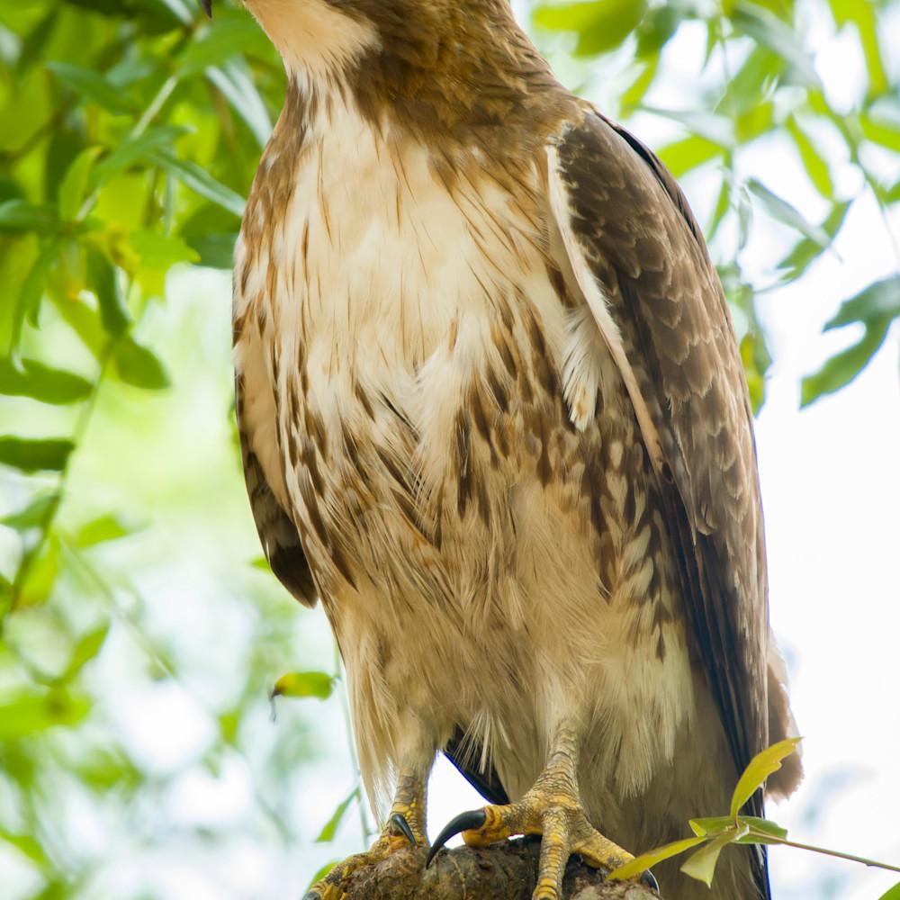Backyard birds apr 2020 20200424 2443 wfq3mw