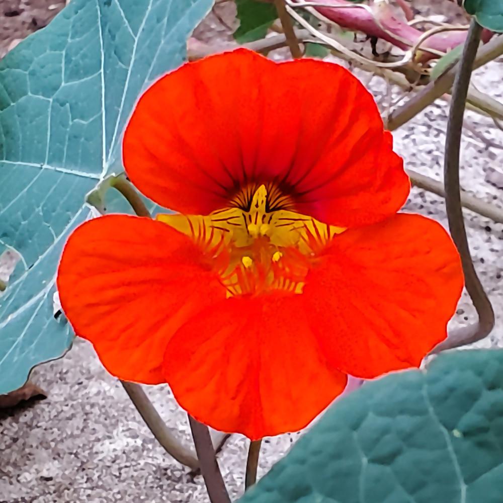 Flower smallbig l9ftuz