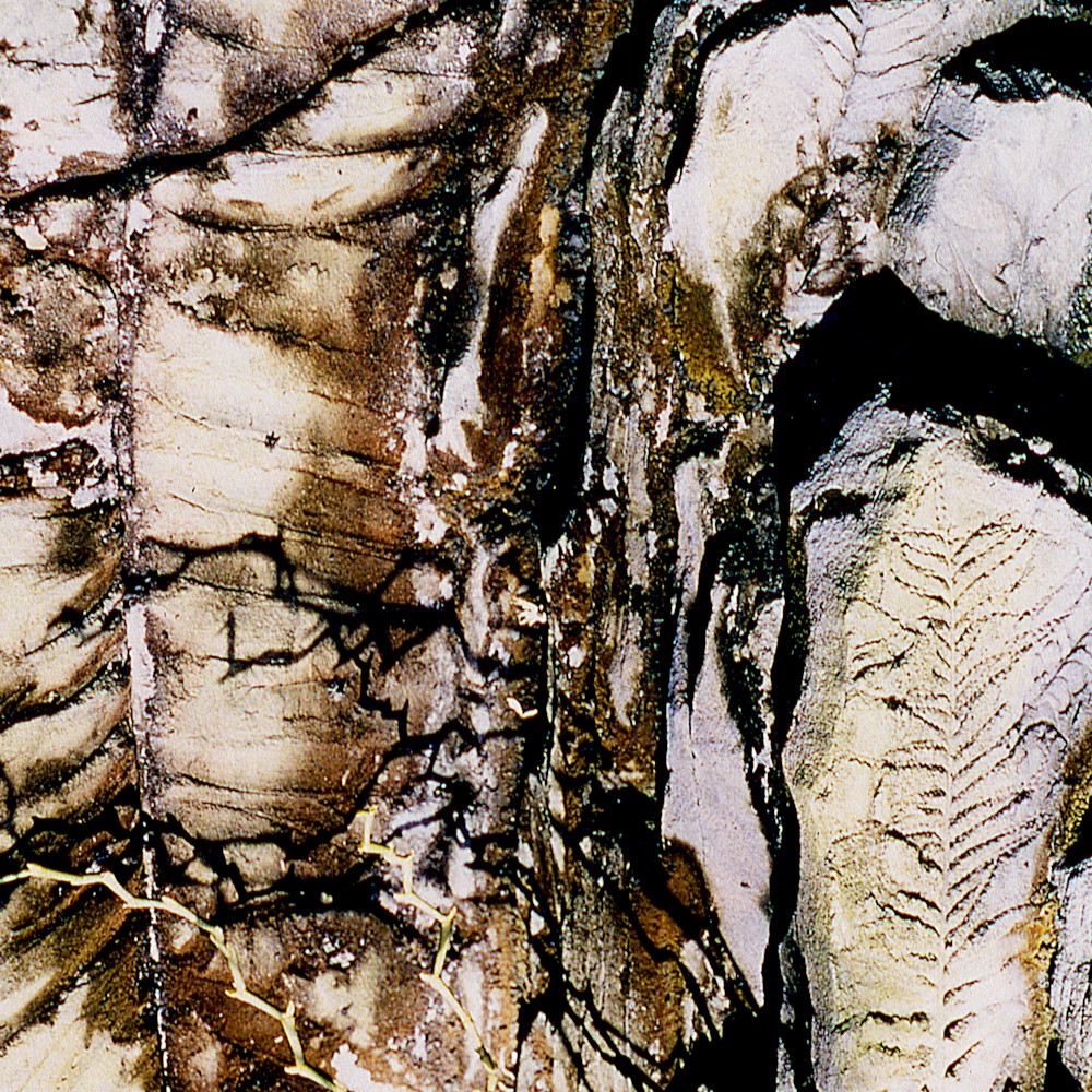 Closer earth fossil acny1195 nature photography sherry mills print 2 n5hqmi