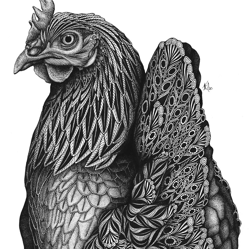 Priscilla chicken gqjrxu