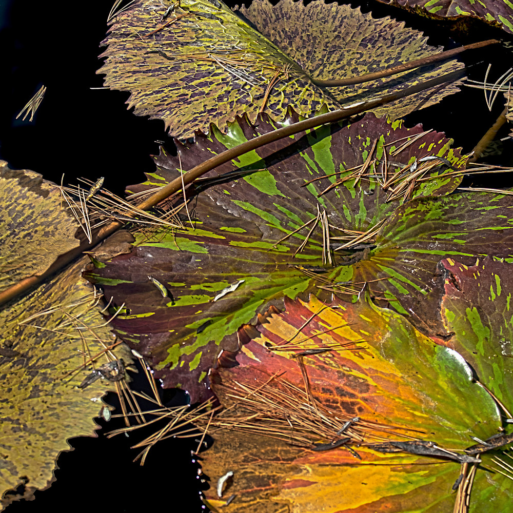 Mother nature s colors ekdxn1