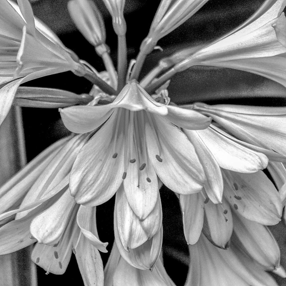 Soft white flowers v6yqha