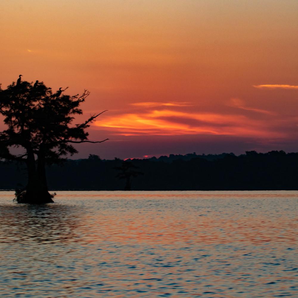 Egret tree sunrise  mg 8459 rlt20 lekjpc