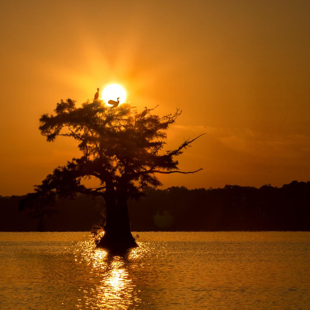 Sunsize cormorant tree  tm mg 8534 rlt20 imwavp