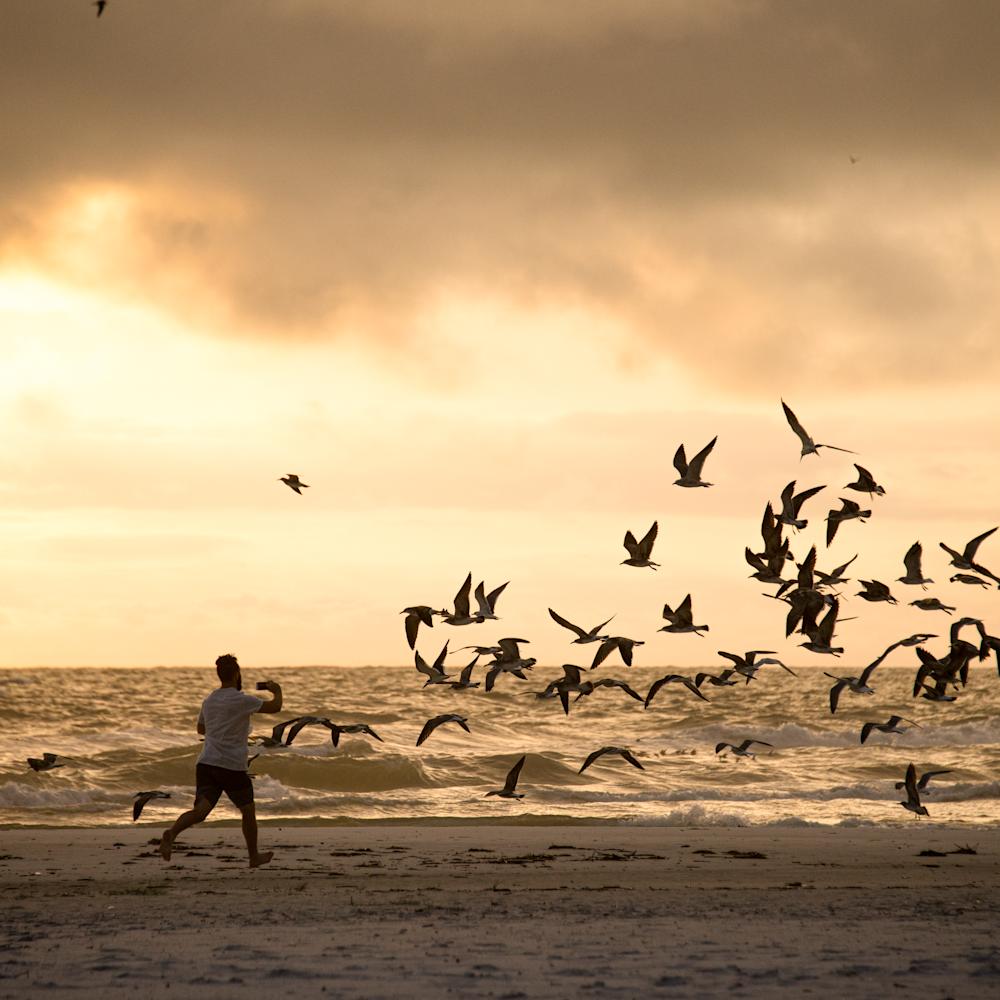 Dancing with gulls xmbwct
