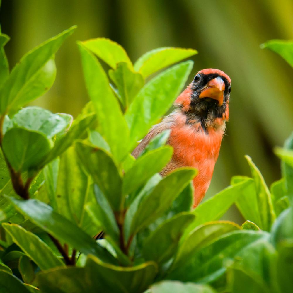 By birds 20200828 0042 l0bvgk