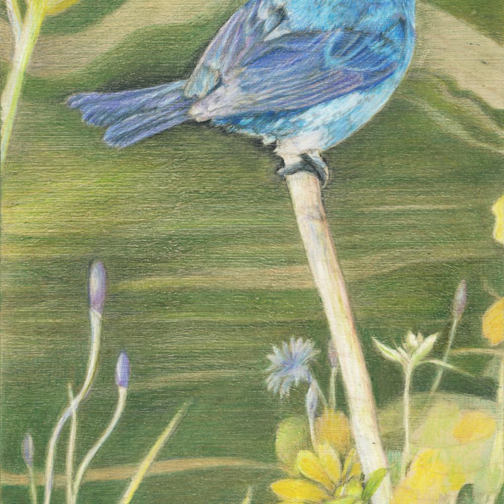 Blue bird 1 1 qsargm