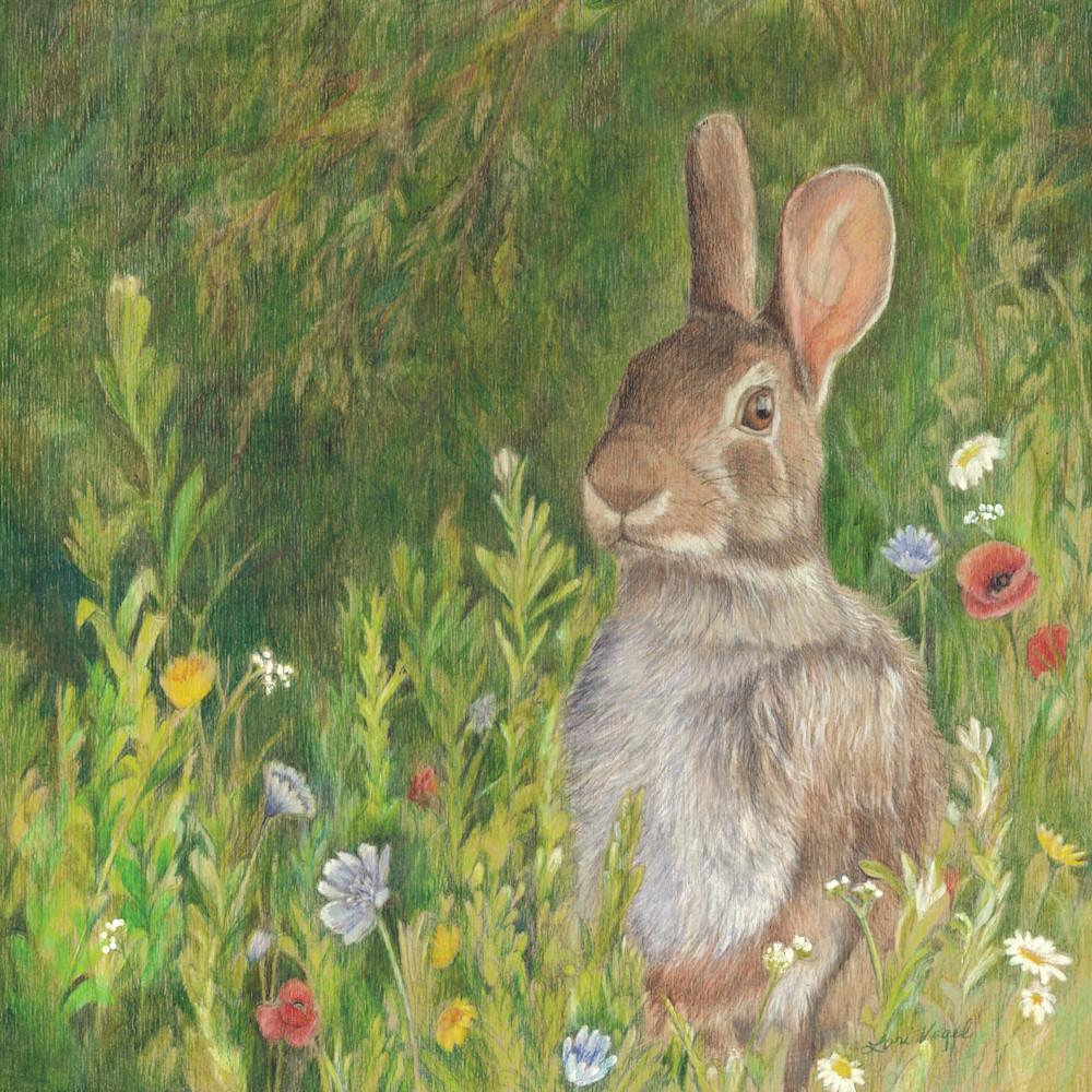 Bunny 1 dznfci